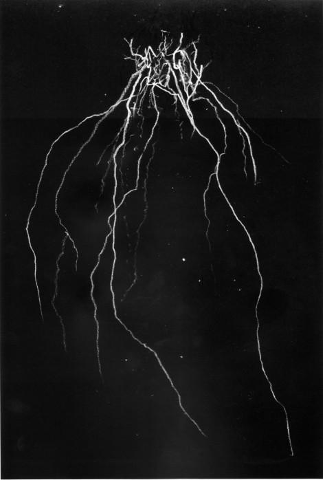 002-blackmetalcytwombly-volume-1