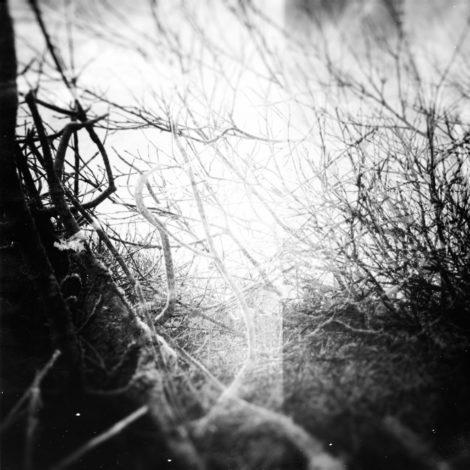 160915_tree