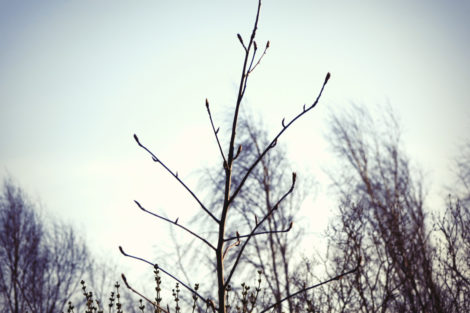 tree_dj